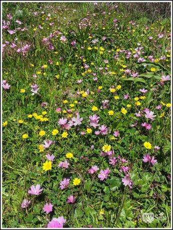 Wildflowers at Point Lobos
