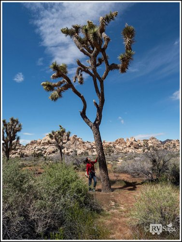 A Diversified Joshua Tree National Park