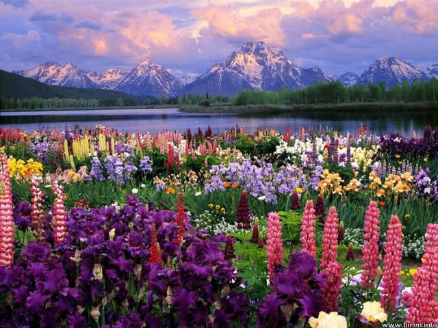 حدائق الازهار الملونة