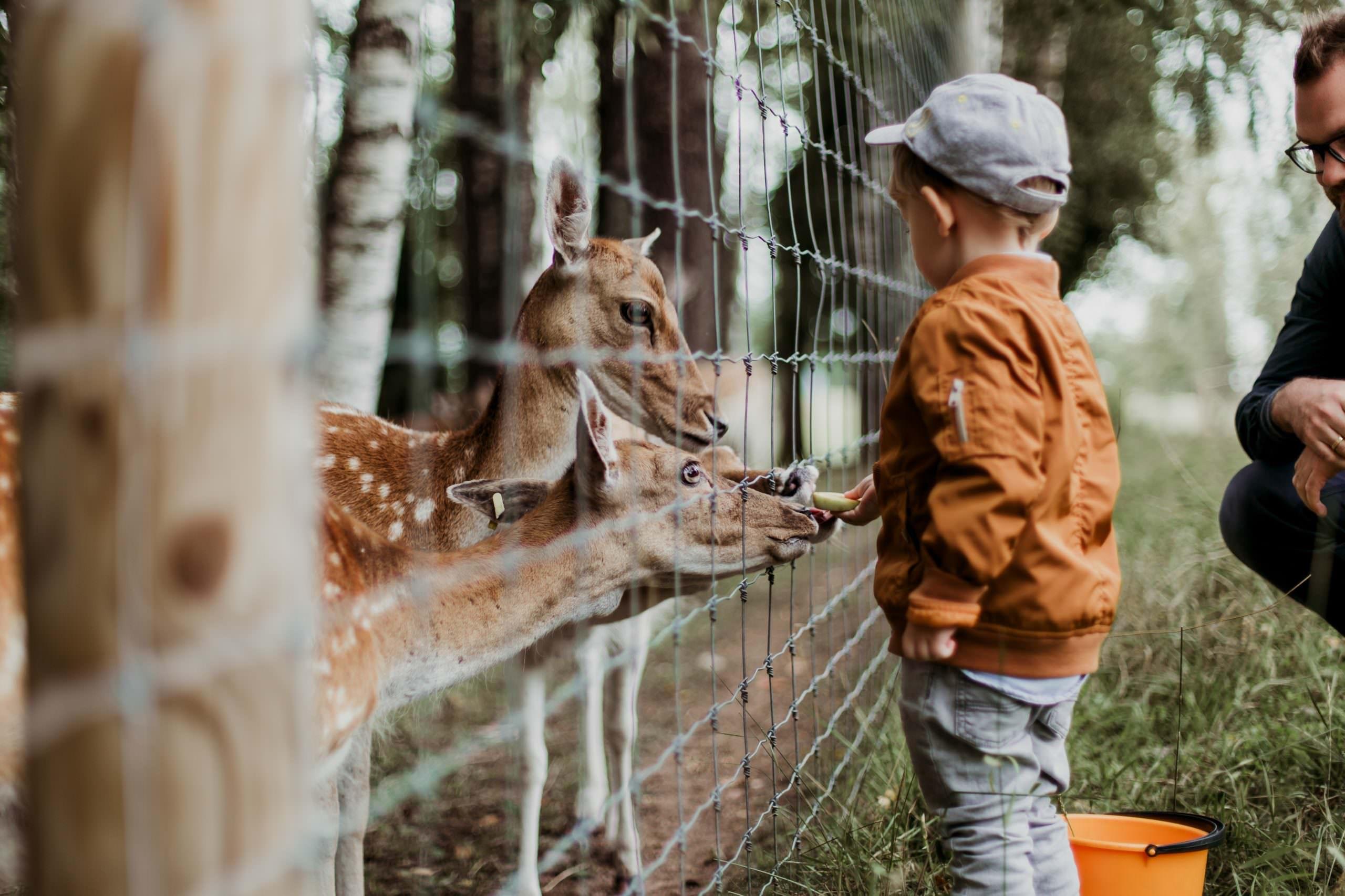 أكبر حدائق الحيوان في العالم
