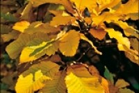 Allgemeine Gartenarbeiten im Herbst
