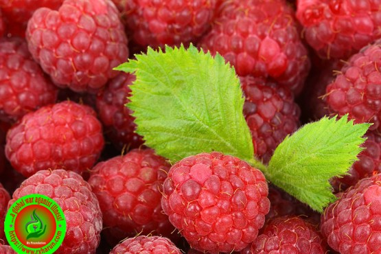 What Is The Best Antioxidant?