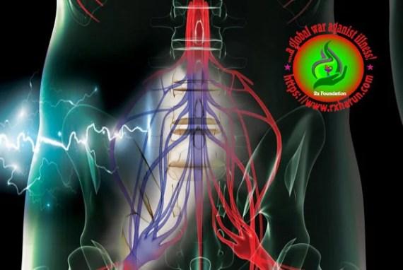 corda equina syndrome/spinal nerve & pheripheral nerve anatomy