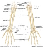 Ulnar Lower End Fracture; Causes, Diagnosis, Treatment