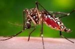 Dengue Fever Symptoms, Diagnosis, Treatment