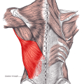 What does latissimus dorsi muscle do?