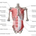 What Is Pyramidalis Muscle?
