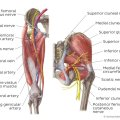 Nerves Supply of Hip Joint
