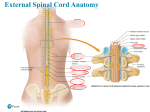 Spinal Cord Injury – Causes, Symptoms, Diagnosis, Treatment