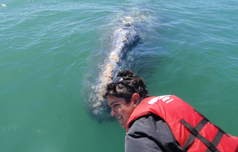SAN PEDRO MARTIR ISLAND, MEXICO: National Geographic Emerging Explorer Ryan Johnson and a gray whale.