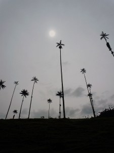 High Mountain Palms