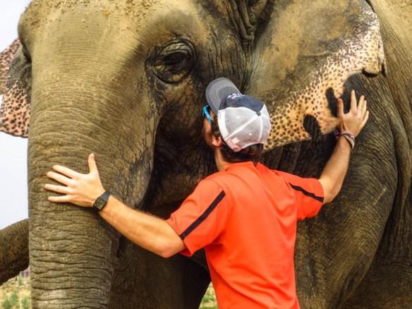 WSOS elephants