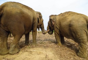 WSOS elephants2-2