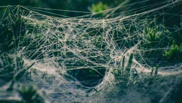 spider web on green plants
