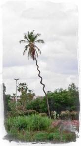 Crooked Coconut Tree Caninde Ceara