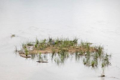 IMG_0074-Nile-CrocodileGoliath-HeronBlacksmith-LapwingWhite-faced-Duck