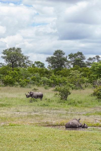 IMG_0211-White-Rhinoceros