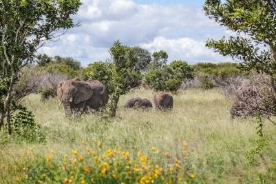 IMG_0363-African-Elephant