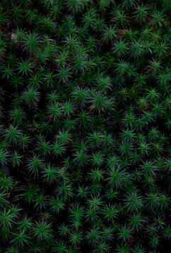 Untitled Plant 2