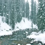 thermal spring, hot spring, winter, snow, forest, pine trees