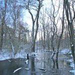 snow, frozen, bare trees, swamp, blue