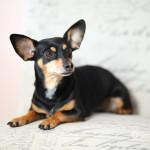 Pet Photography Palm Beach