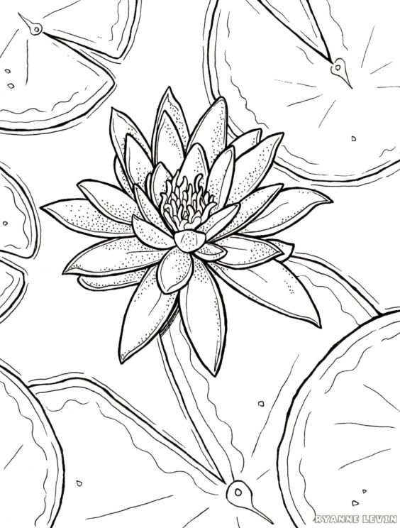 free printable water lily coloring page download – ryanne