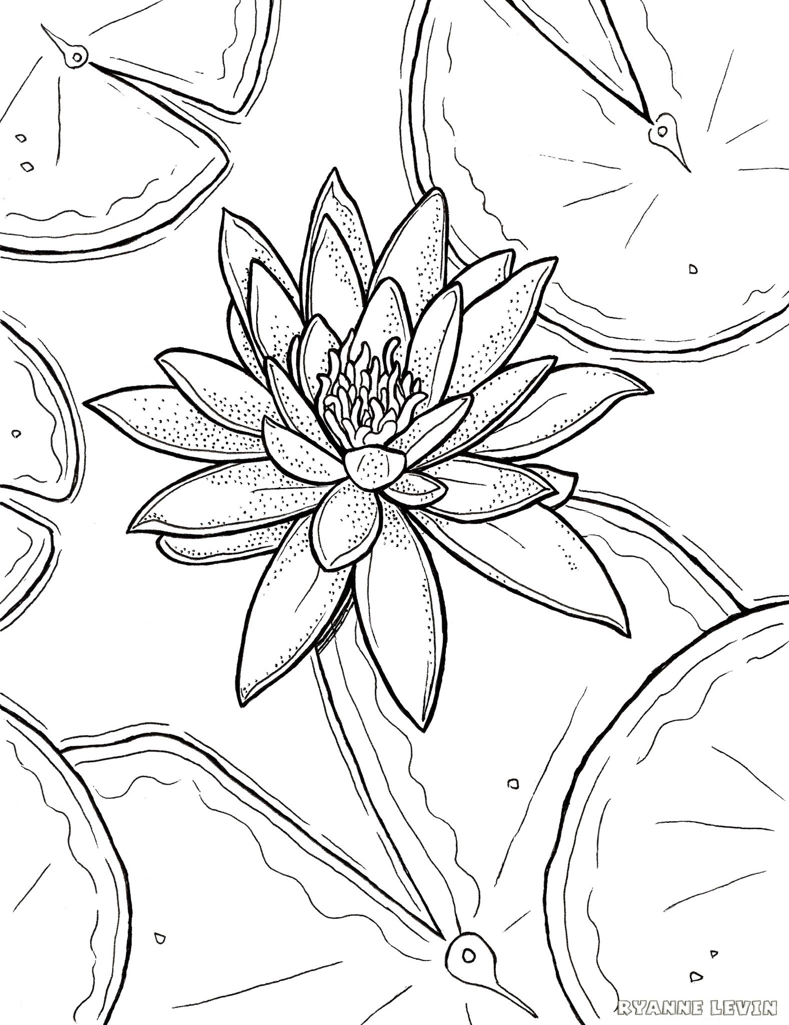 Free Printable Water Lily Coloring Page Download Ryanne Levin