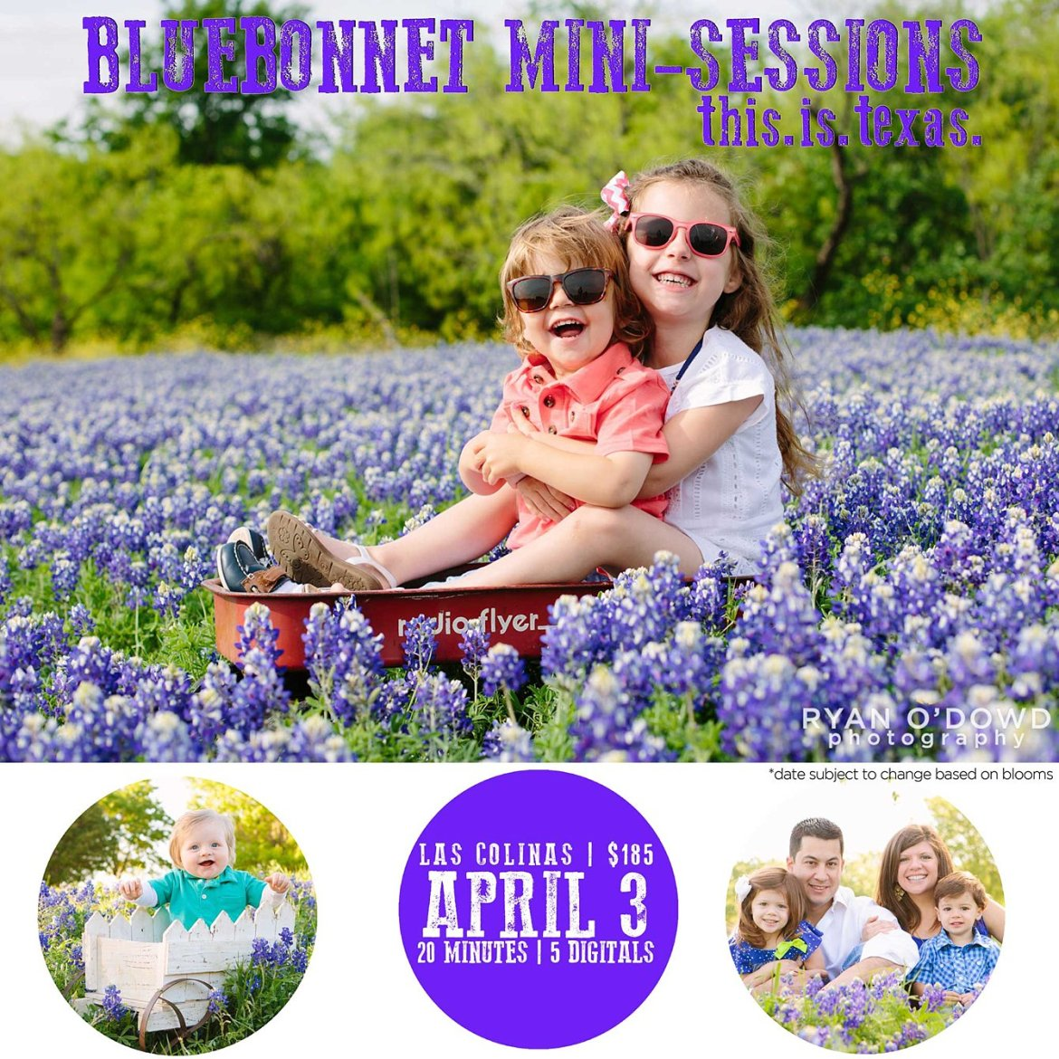 dallas bluebonnet sessions_2277.jpg