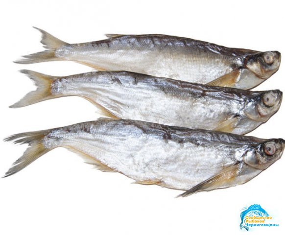 Фото Чехонь Рыбы