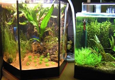 Založení šestihranného akvária