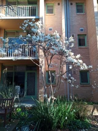 SpringBlossom (2)