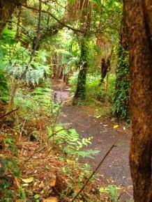 bush walk to beach