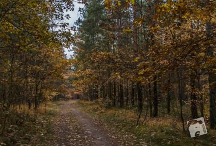 grabicz-jesienia-5116