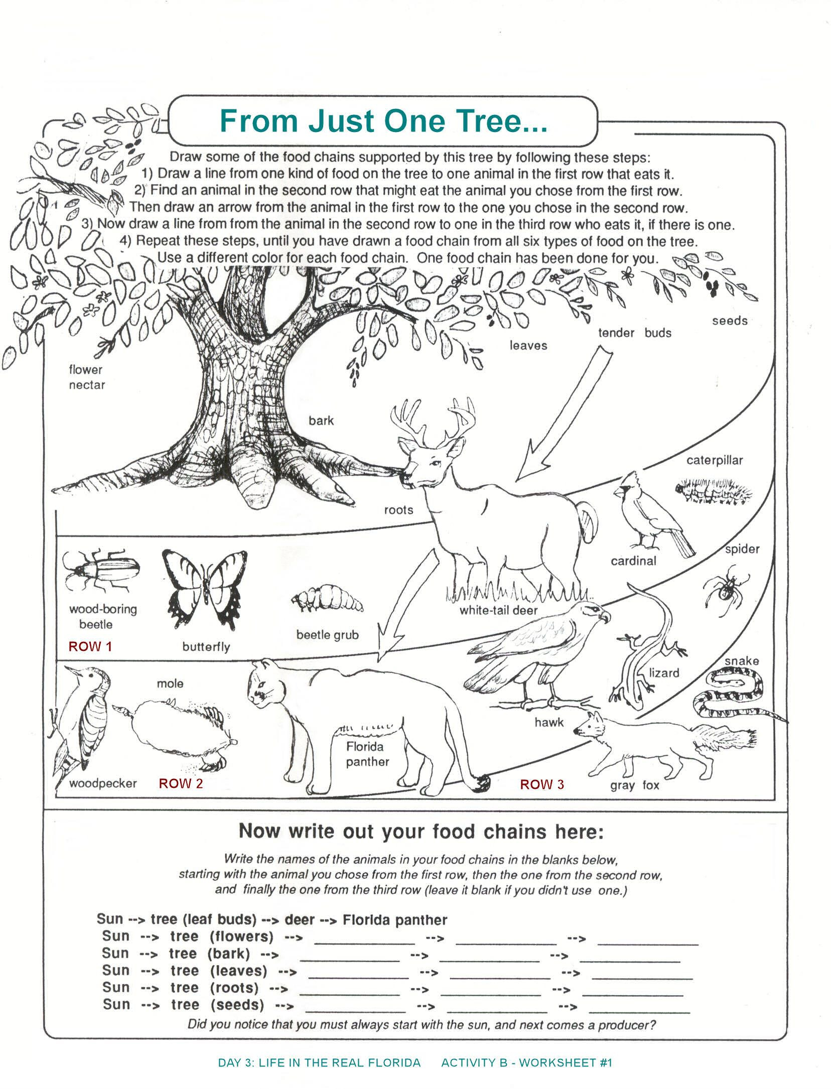 Animal Food Chain Worksheets Theme Library