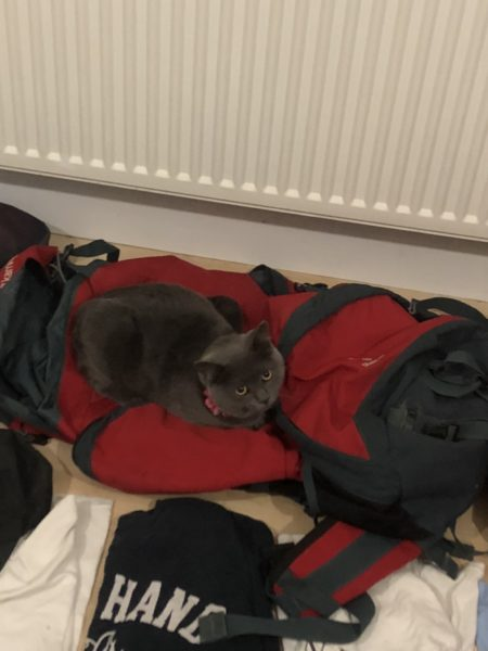 A picture of my cat laying on my backpack