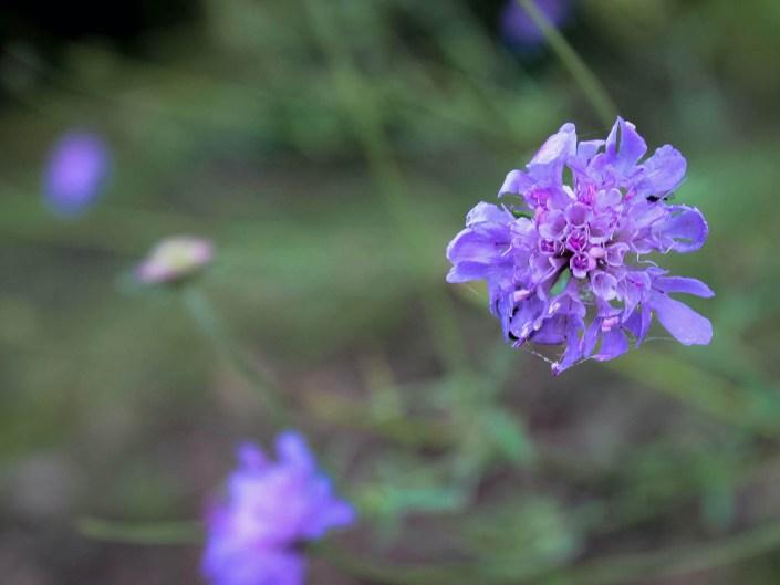 Almost Lavender