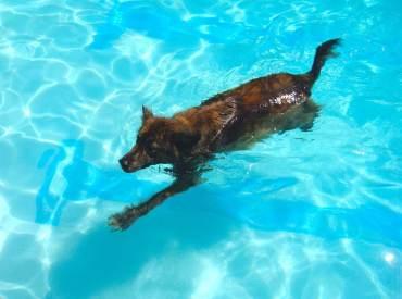 being in the flow dog sawyer gargulinski swimming