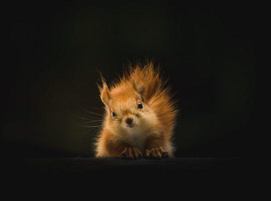 stressed squirrel