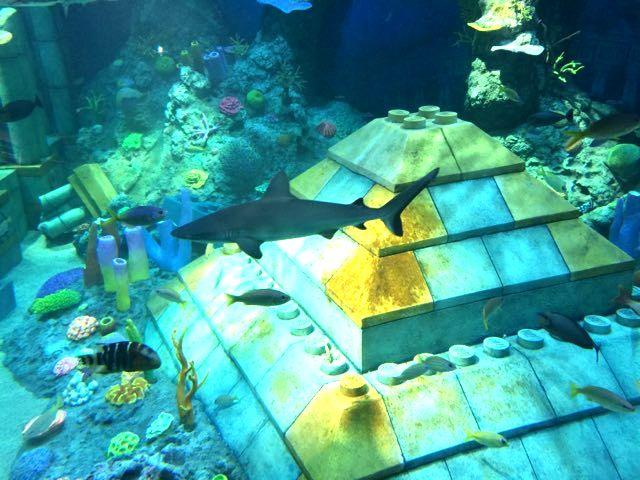 レゴランド名古屋サメ