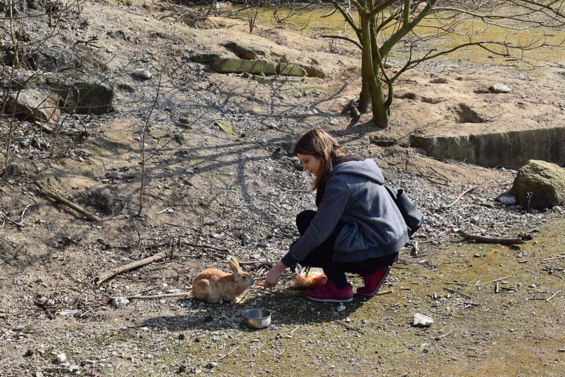 Feeding rabbits on Okunoshima island in Japan
