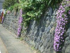 伊豆の花いっぱい街道