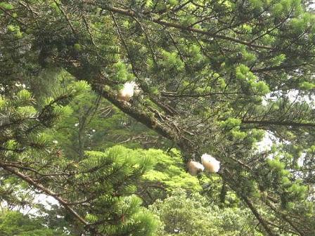 枝先の遠景