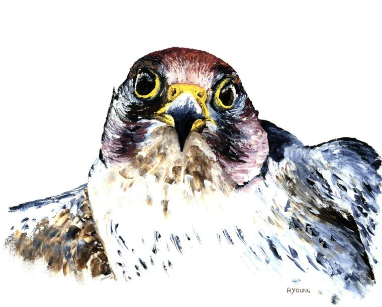 Wildlife Fine Art Gallery. Available original fine art. The Hunter - Peregrine Falcon. Fine art original raptor oil painting on a 51cm x 41cm canvas created in 2005 using a knife. Original available. Framed = £330