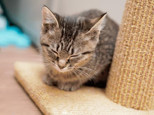 猫の爪とぎを防ぎたい!