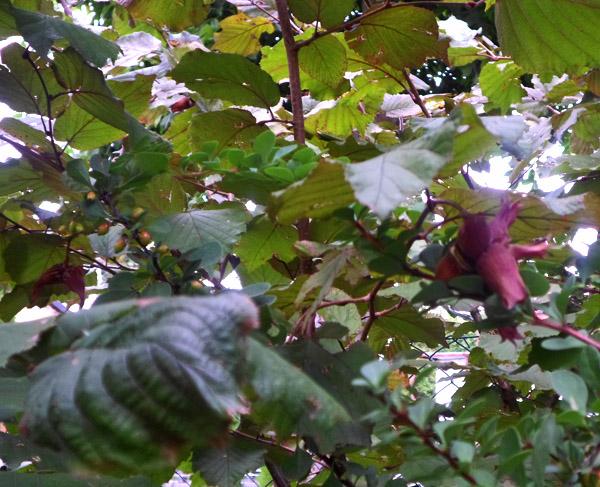 wrzesień w ogrodzie