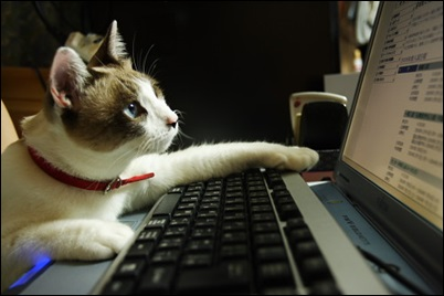 インターネットビジネス、アフィリエイト、昇り龍物語、プロフィール、インターネットビジネスを初めて