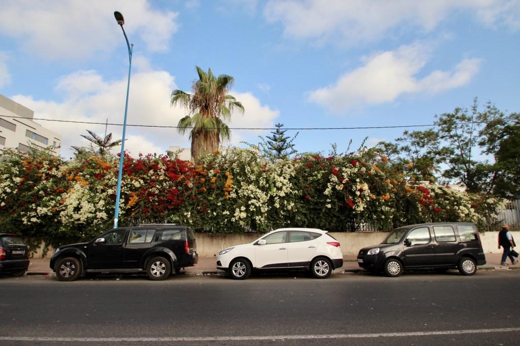 モロッコ ブーゲンビリア