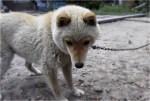 similar_to_sheep_dog0.jpg