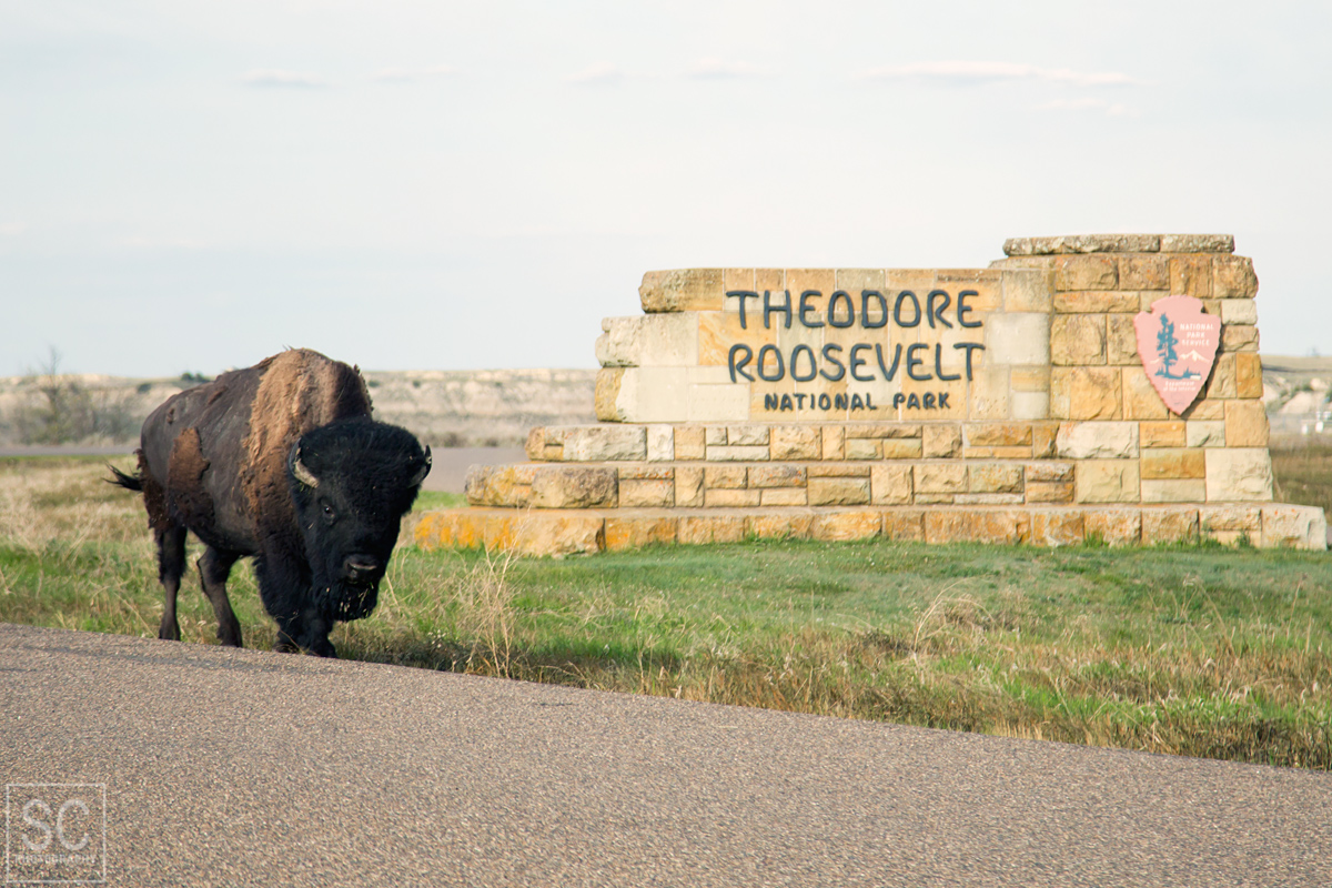 Theodore Roosevelt National Park Nd Sc Photography